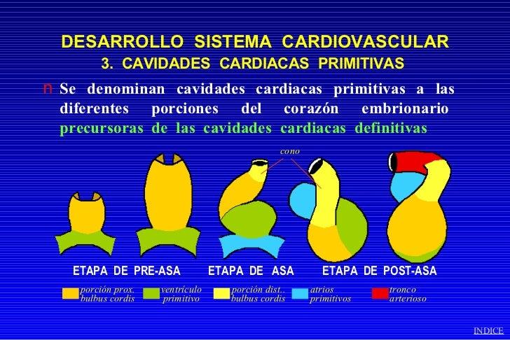 desarrollo embrionario del sistema cardiovascular pdf