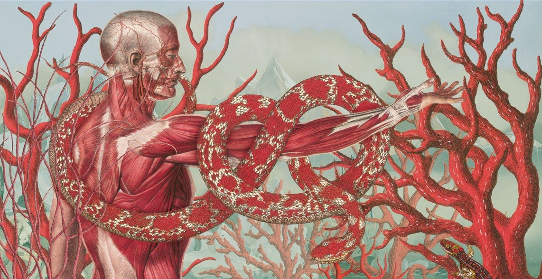 anatomia hombre y mujer dibujo pdf