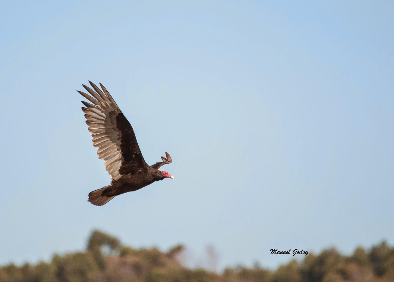 aves quinta region chile pdf