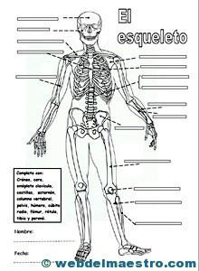 biomecanica basica del sistema musculo esqueletico pdf descargar