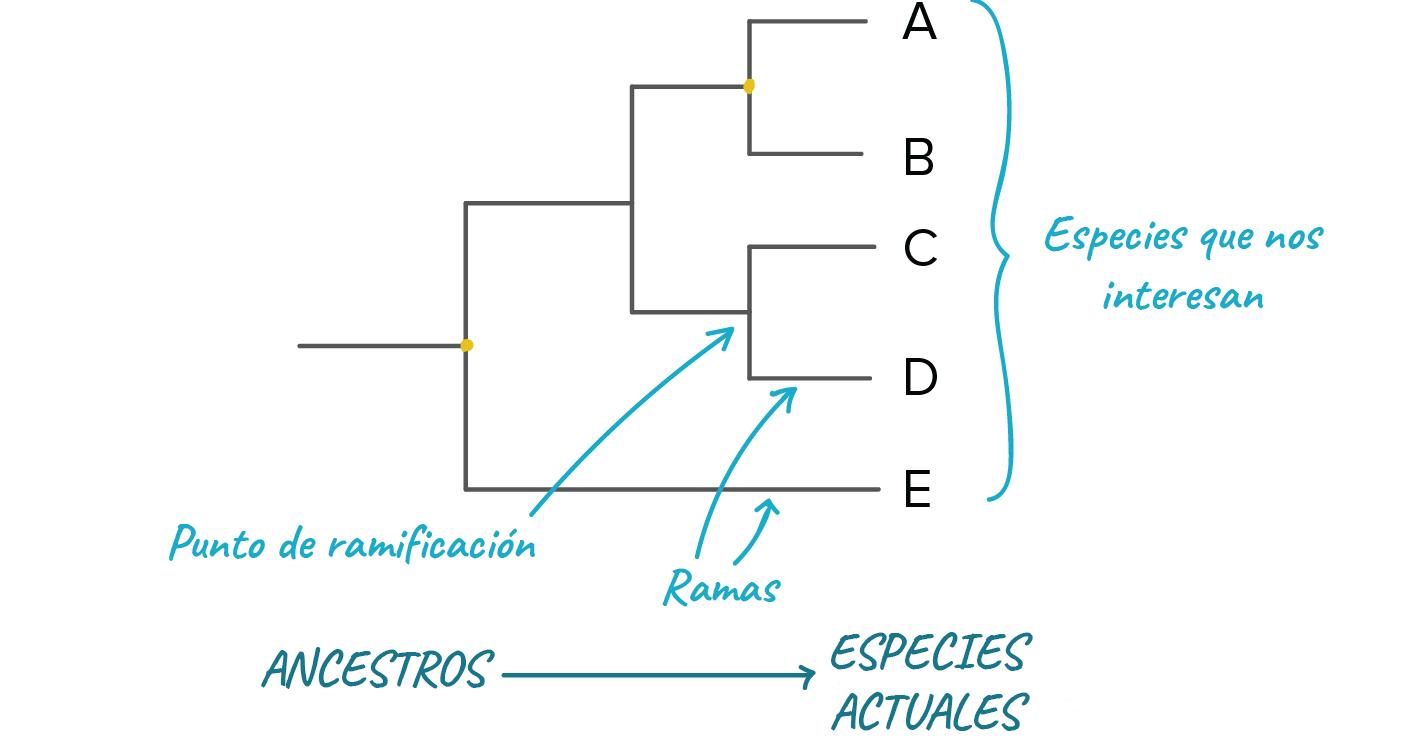 arbol del problema pdf seres vivos