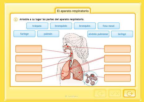 aparato respiratorio y su funcionamiento minsal pdf