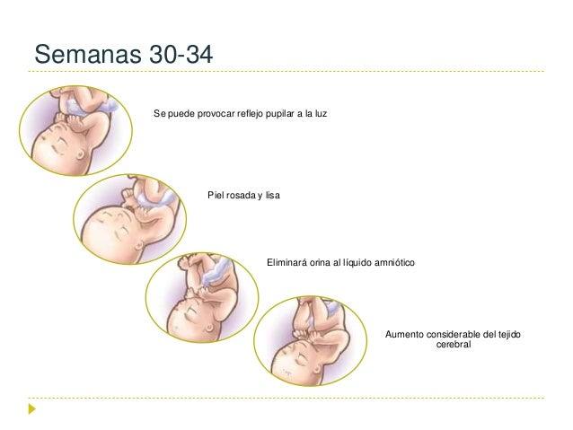 desarrollo fetal semana a semana pdf