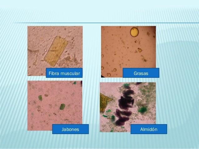 cantidad de microbio en la materia fecal pdf