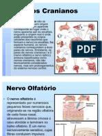 atlas grafico de acupuntura pdf gratis