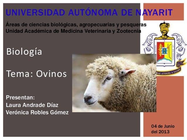 condiciones corporales de los ovinos
